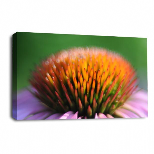 Floral Flower Wall Art Orange Green Grey White Picture Print